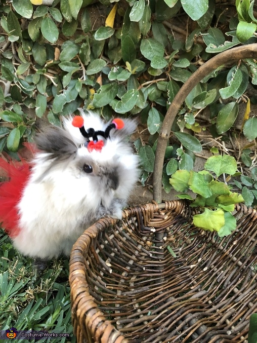 Exploring, Charliee the Fluffy Ladybug Costume