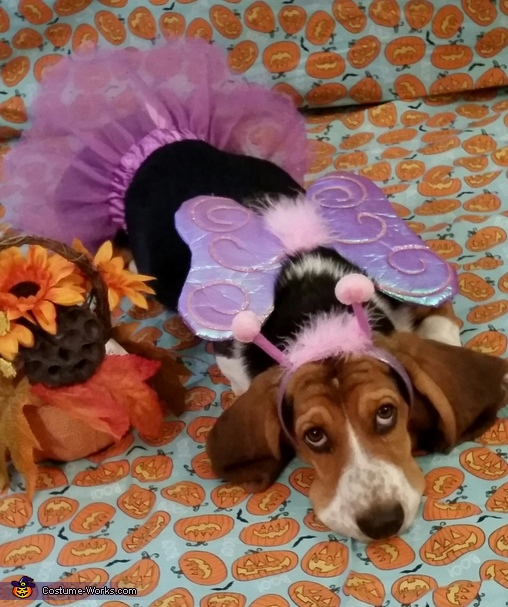 Rosey the Flutter Bug Fairy Costume
