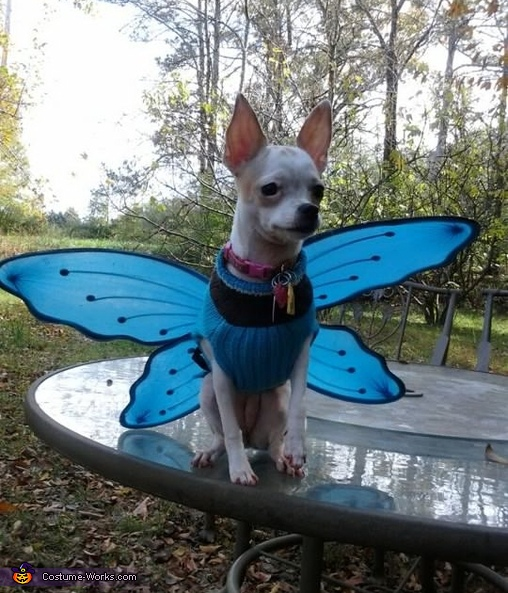 Fly Away - Homemade costumes for pets