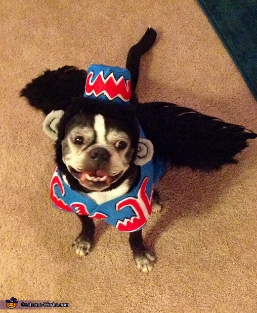 Flying Monkey - Homemade costumes for pets