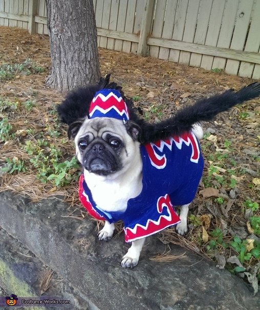 Flying Monkey dog costume & Wicked Witch and Flying Monkey Dog Costume - Photo 2/4