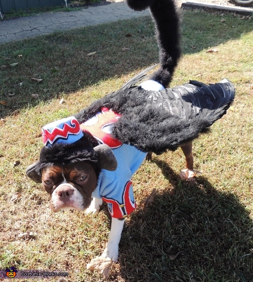 Flying Monkey Dog Costume