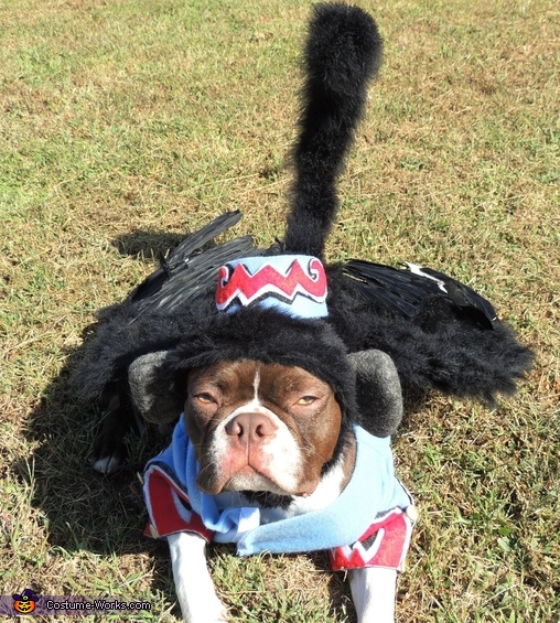 Can I just lay here and nap?, Flying Monkey Dog Costume