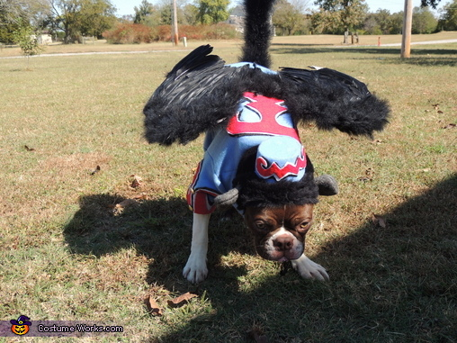 Ready for flight!, Flying Monkey Dog Costume