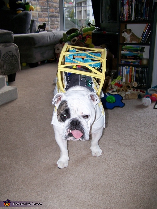 Fort Pitt Bridge Dog Homemade Costume