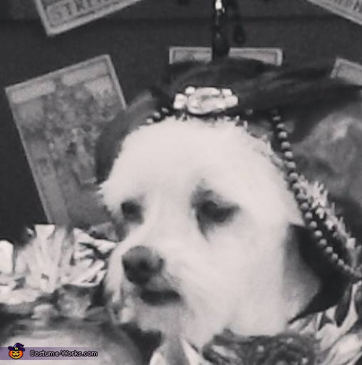 DIY Fortune Teller Dog Costume
