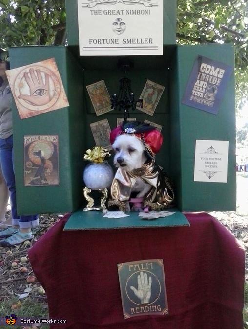 Fortune Teller Dog Costume