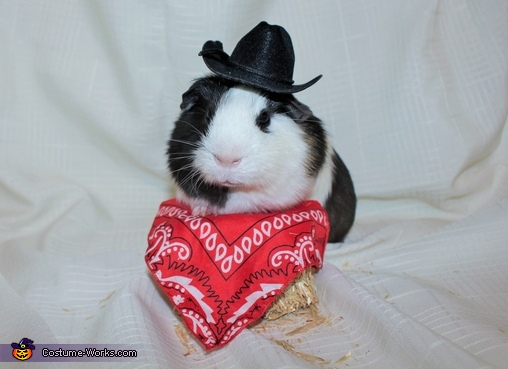 Frankie the Guinea Pig Costume