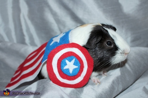 Captain America, Frankie the Guinea Pig Costume