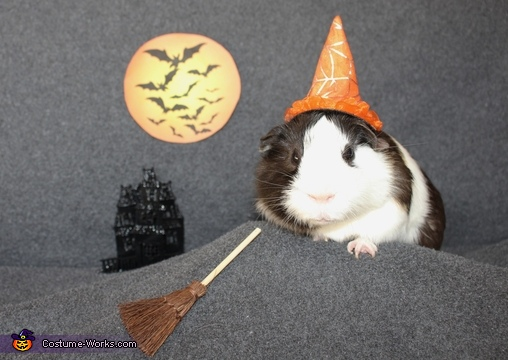 Frankie the Pig-Witch, Frankie the Guinea Pig Costume