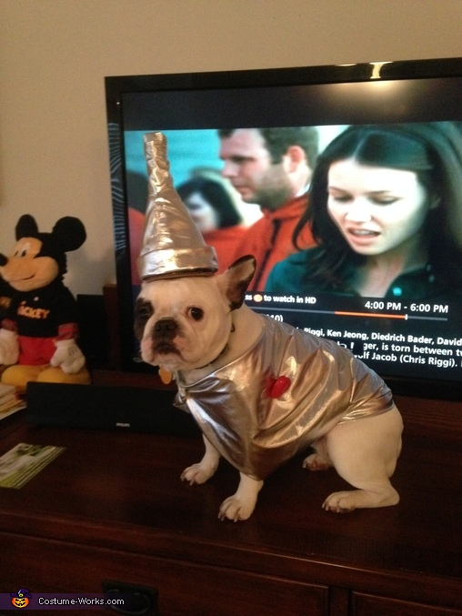 Tin Man Frenchie 2, French Bulldog Tin Man Costume