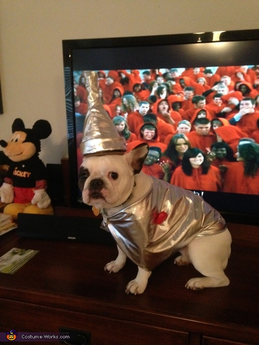 Tin Man Frenchie 3, French Bulldog Tin Man Costume