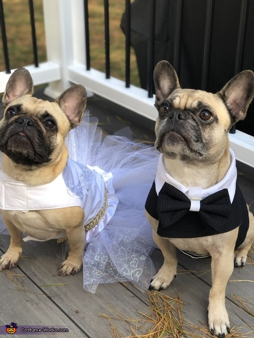 Frenchie Bride and Groom Costume