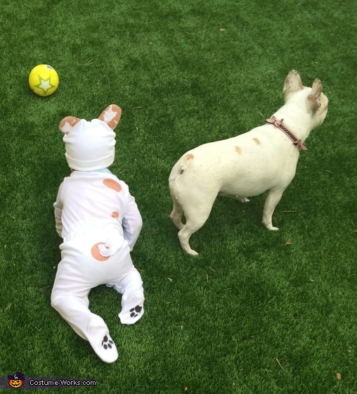 Frenchie Twins Costume