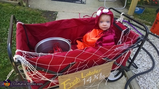 let's go momma!!, Fresh Lobster Baby Costume