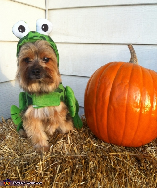 Frog Puppy Costume