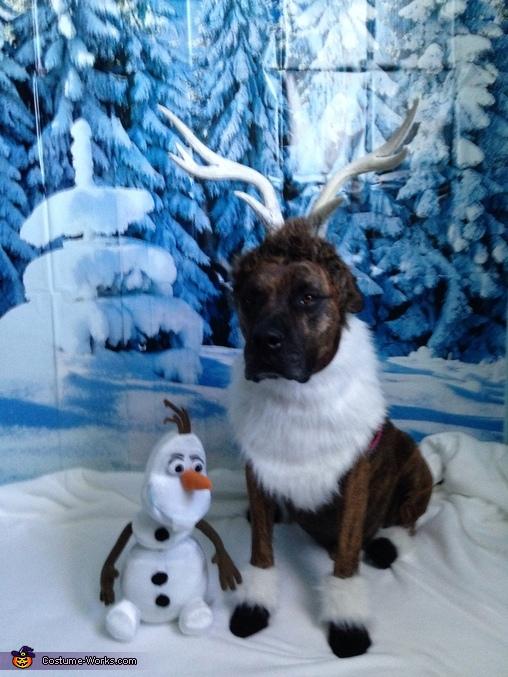 family group unique picture ideas - Frozen Dog Costumes 3 3