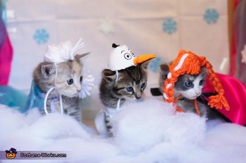 Bandit Halloween Costume