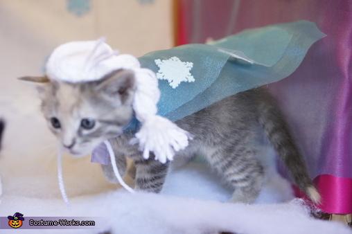 """Elsa, """"Purrozen"""" Costume"""