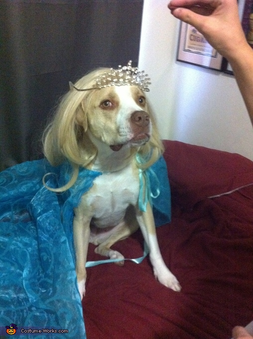 Frozen Elsa Dog Costume