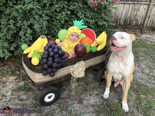Her guard dog, Fruit Basket Costume
