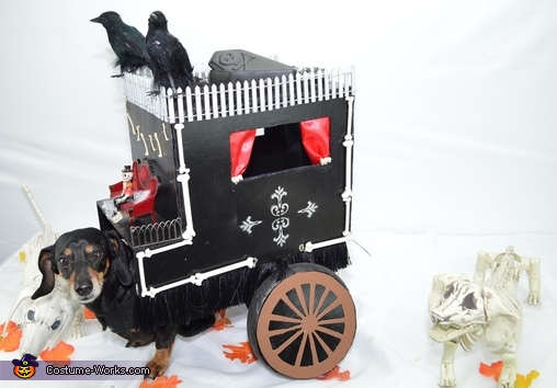 Funeral Carriage Dog Homemade Costume