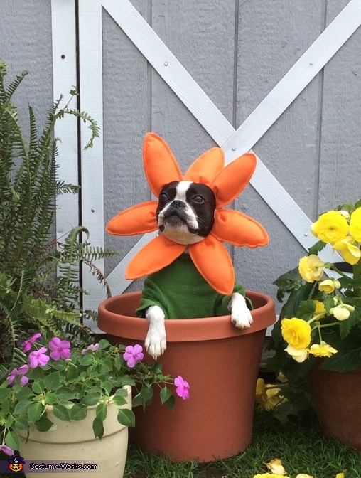 Pretty flower,  Flowers Dogs Costume