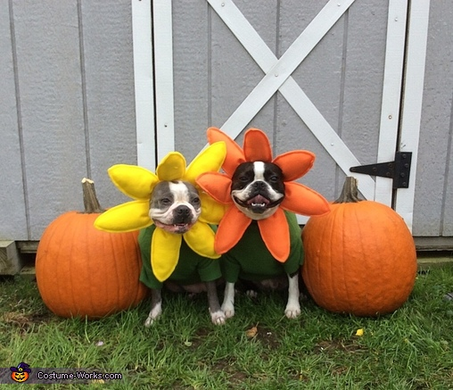 Pretty Flowers,  Flowers Dogs Costume