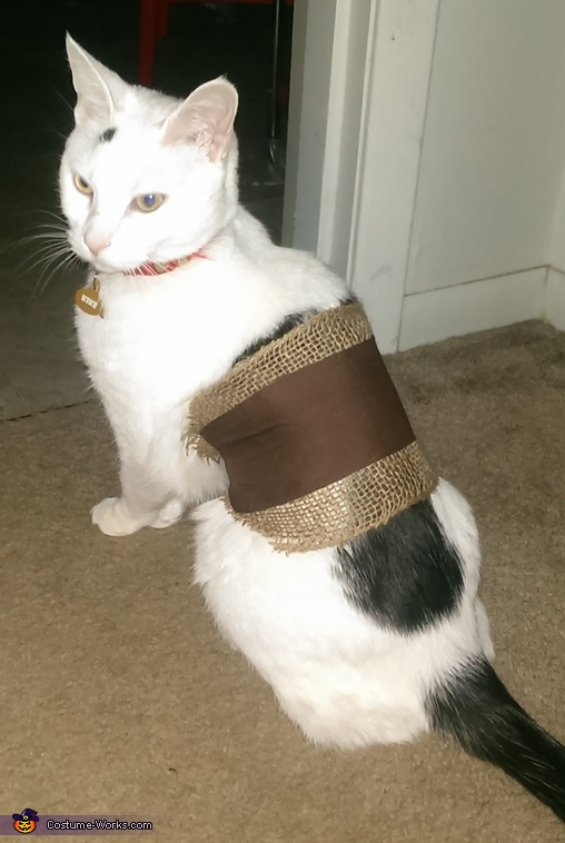 Warrior Kitty, Game of Thrones: Khaleesi & Drogo Costume