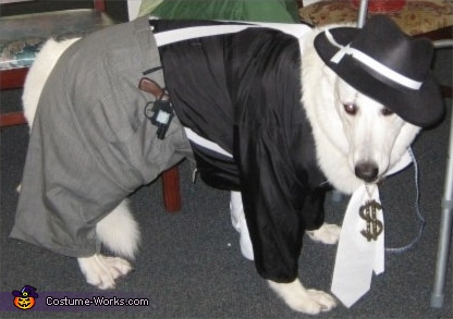 Gangsta Dog - Homemade costumes for pets