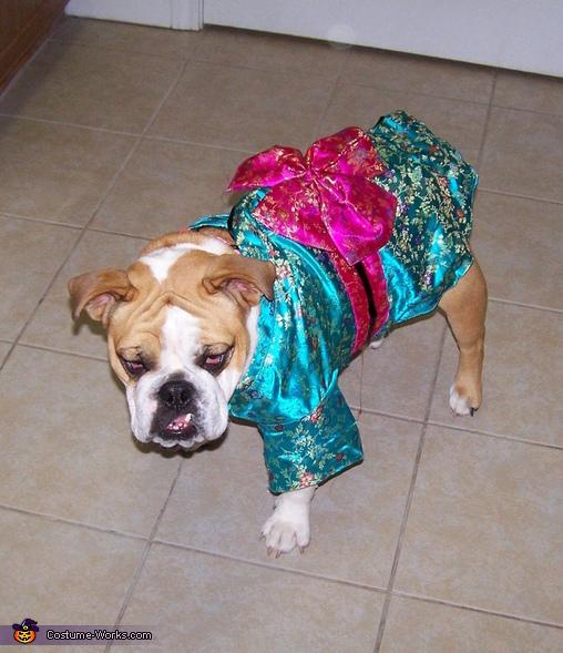 Annabelle in her kimono, Geisha Girl Dog Costume