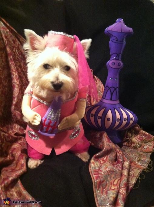 Genie Dog Costume