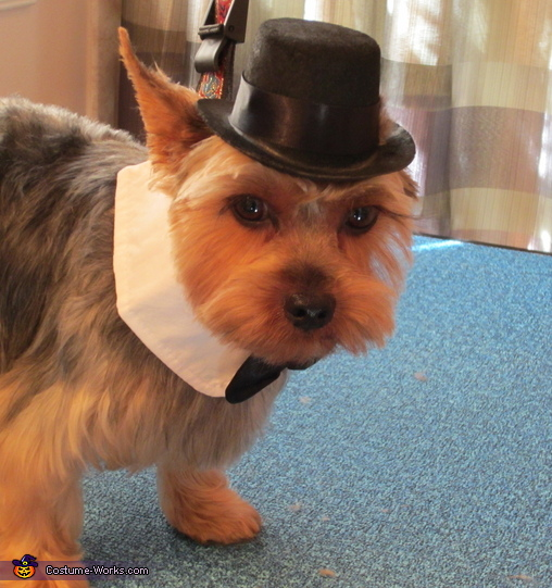Gentlemen Costume for Dogs