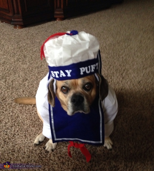 Stay puft, Ghostbusters Dog Costumes