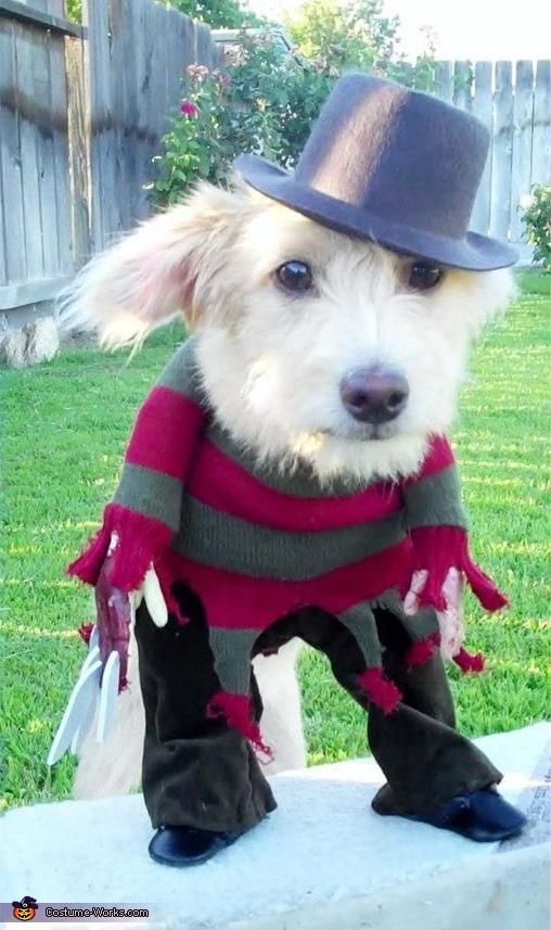 Dog Freddy Krueger Costume