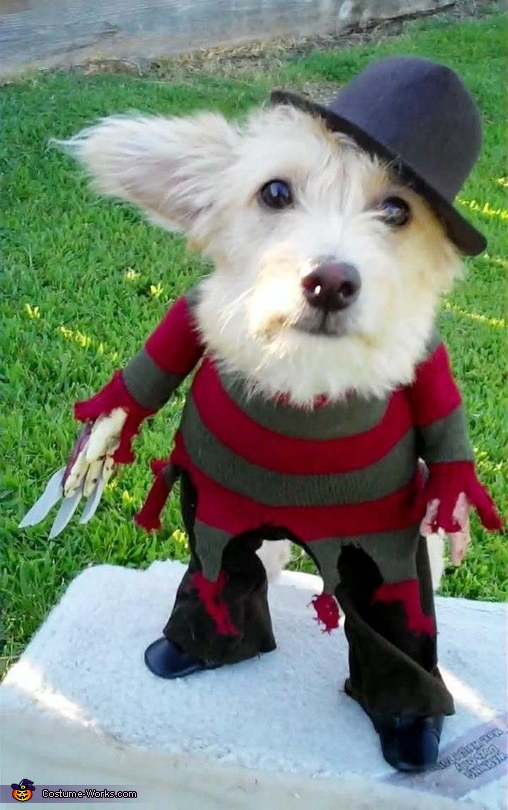 Freddy Krueger - Homemade costumes for pets