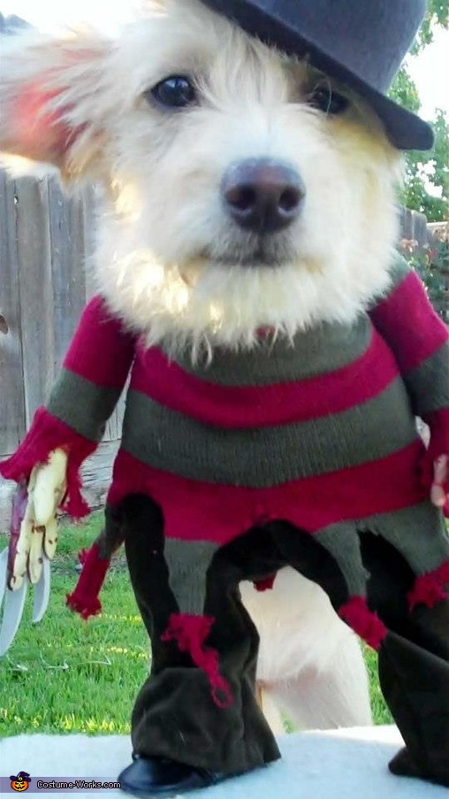 Dog Freddy Krueger Costume