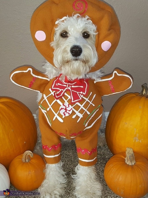Gingerbread Pup Costume