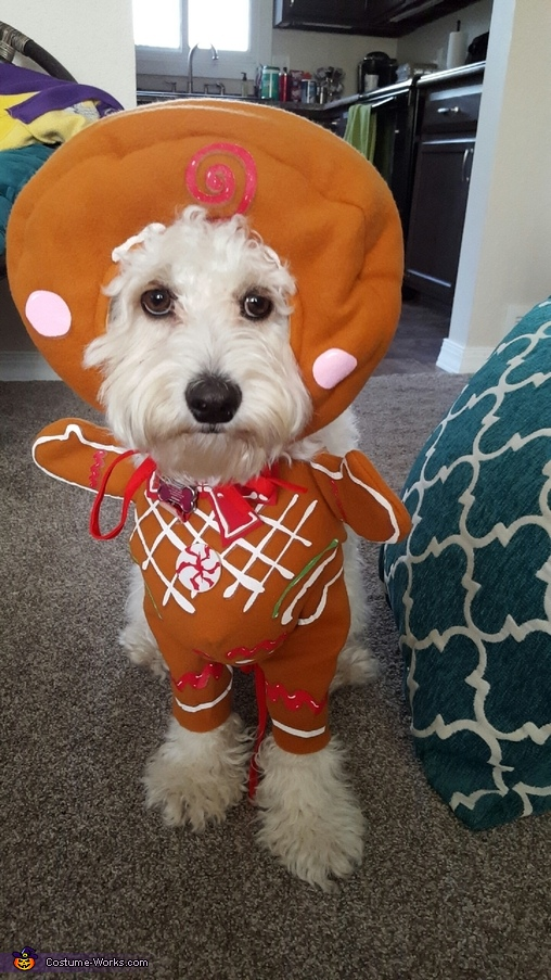 Mom, I don't wanna be a gingerbread anymore!, Gingerbread Pup Costume