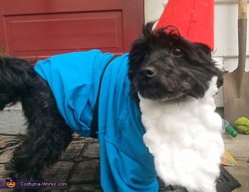 Gnome Dog Homemade Costume