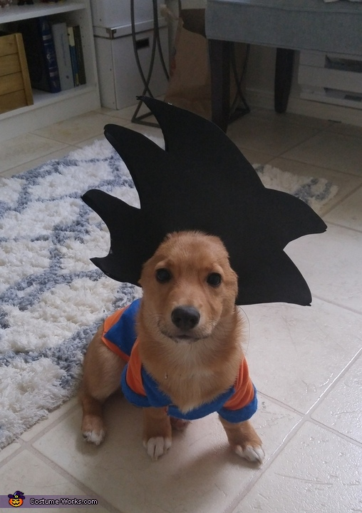 Goku Dog Homemade Costume