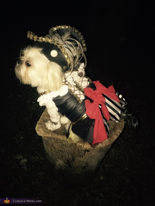 Golden Pirates Dogs Homemade Costume