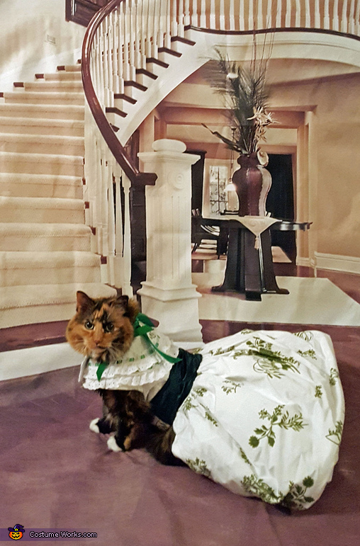 Gone With The Wind Cat Costume