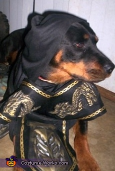 Ninja - Homemade costumes for pets