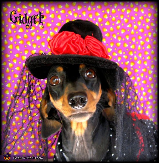 Goth Ween.  - Homemade costumes for pets