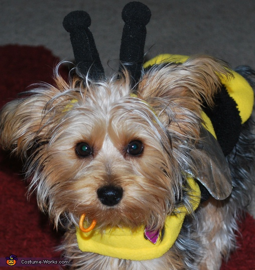 Gracie Bee - Homemade costumes for pets