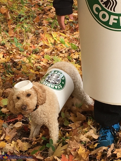 Closeup Short Puppuccino, Grande Frappuccino and Short Puppuccino Costume