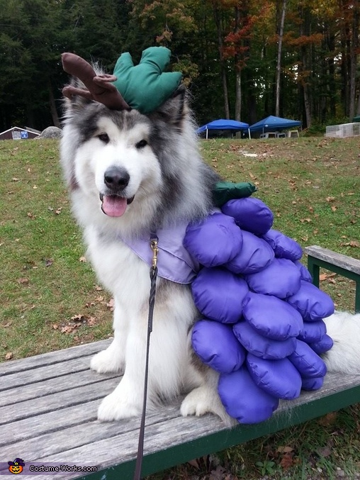 Grape Jelly Costume