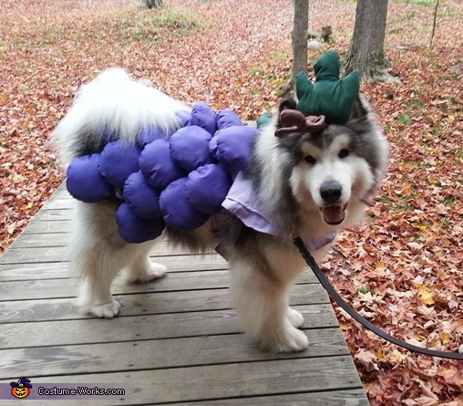 Grape Jelly side profile, Grape Jelly Costume