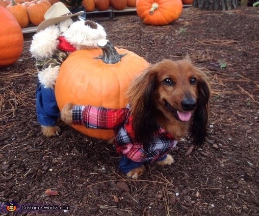 The Great Pumpkin Harvest Costume